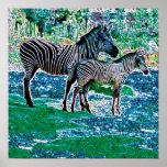 glowing zebras 01 posters