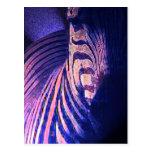 Glowing Zebras 09 Postcard
