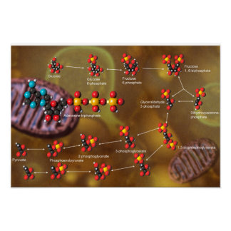 Glycolysis poster