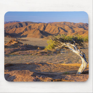 Gnarled Tree And Desert Lands, Richtersveld Mouse Pad
