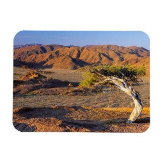 Gnarled Tree And Desert Lands, Richtersveld Rectangular Magnets