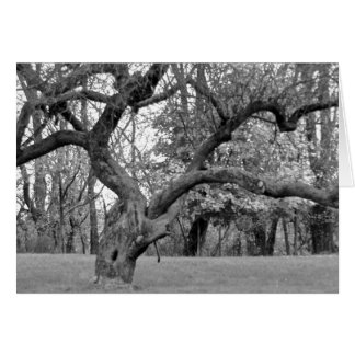 Gnarled Tree Card