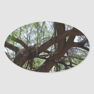 Gnarly Mesquite Branches Oval Sticker