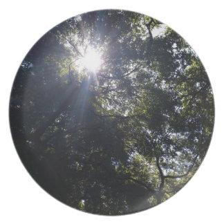 Gnarly oak. plate