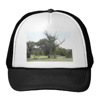 Gnarly Old Tree Trucker Hat
