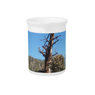 Gnarly Tree Beverage Pitchers