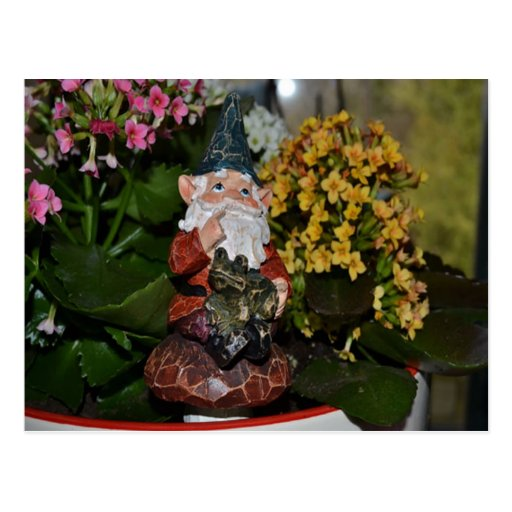 Gnome with Frog-full size Postcard