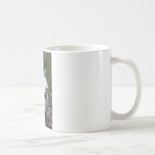 Gnomo Tazas De Café