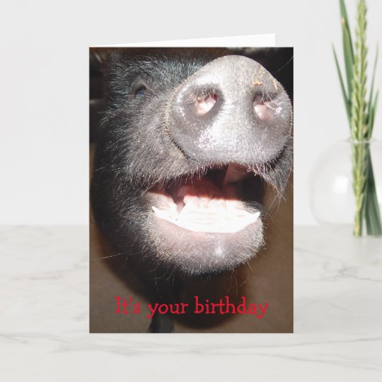 Go Ahead And Squeal Pig Birthday Card Zazzle