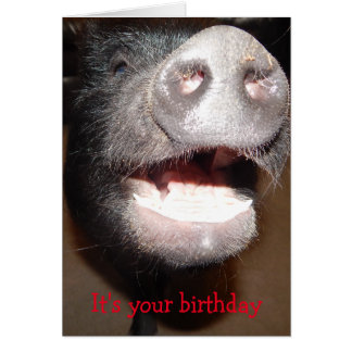 Go ahead and squeal, Pig Birthday card