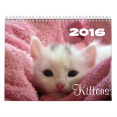 Go Cute ~ Go Kittens 2016 Calendar at Zazzle
