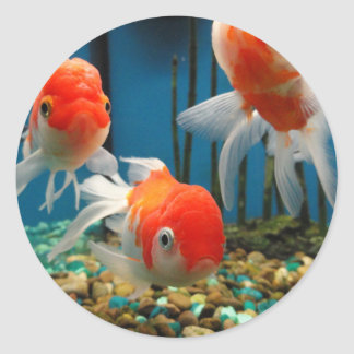 Go Fish Classic Round Sticker