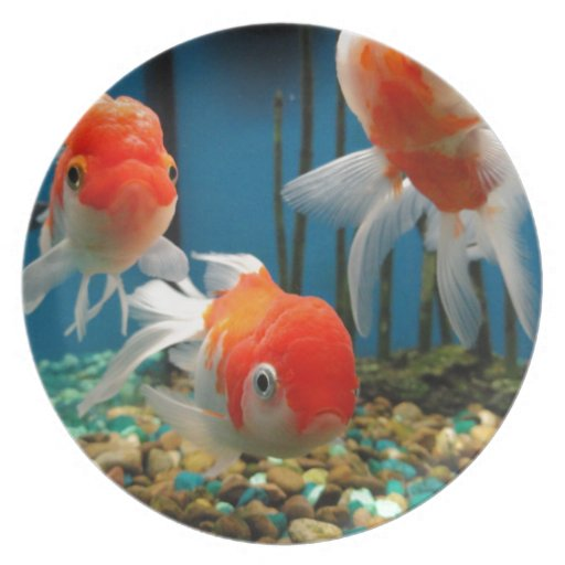 Go fish melamine plate zazzle for What goes good with fish