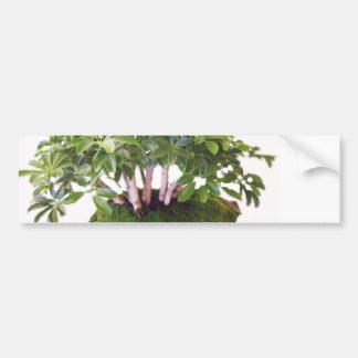 go green bonsai tree designs bumper sticker