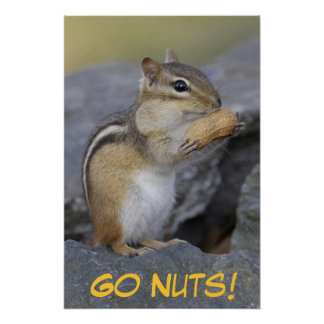 Go Nuts! Poster