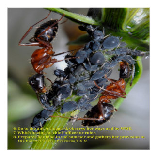 Go to the Ant............ Posters