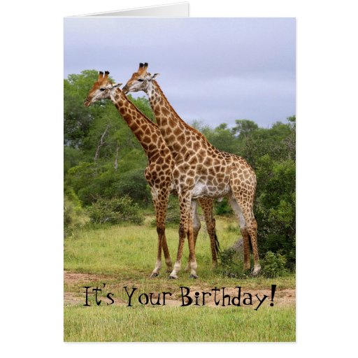 """Go Wild"" Happy Birthday Giraffes Card"