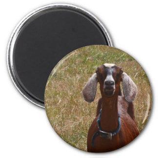 Goat 2 Inch Round Magnet
