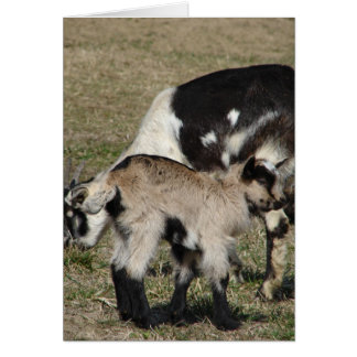 Goat and Goat Kid Card