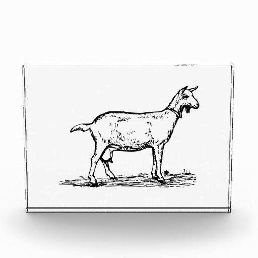 Goat Award