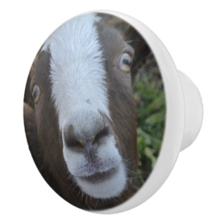 Goat Barnyard Farm Animal Ceramic Knob