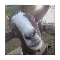 Goat Barnyard Farm Animal Ceramic Tile