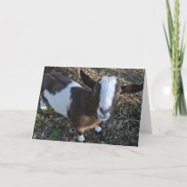 Goat Barnyard Farm Animal Holiday Card