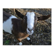 Goat Barnyard Farm Animal Postcard