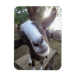 Goat Barnyard Farm Animal Rectangular Photo Magnet
