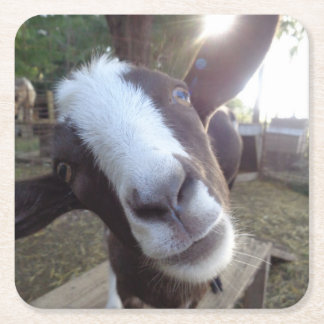 Goat Barnyard Farm Animal Square Paper Coaster