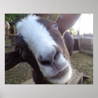 Goat Barnyard Farm Animal Wall Art Print