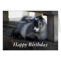 Goat Birthday Card