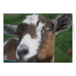 Goat Blank card