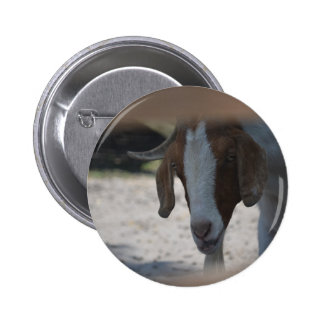 Goat Buttons
