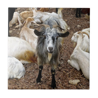 Goat, Ceramic Tiles