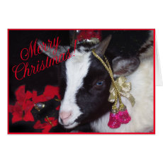Goat Christmas Card Rufus