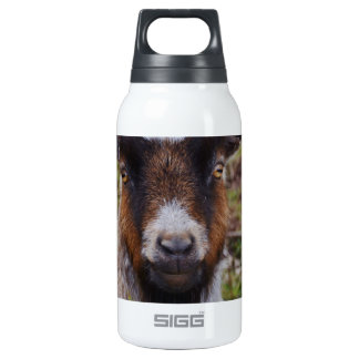 Goat close up. insulated water bottle