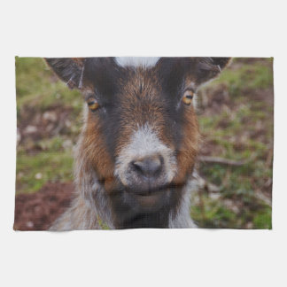 Goat close up. kitchen towel