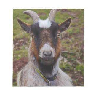 Goat close up. notepad