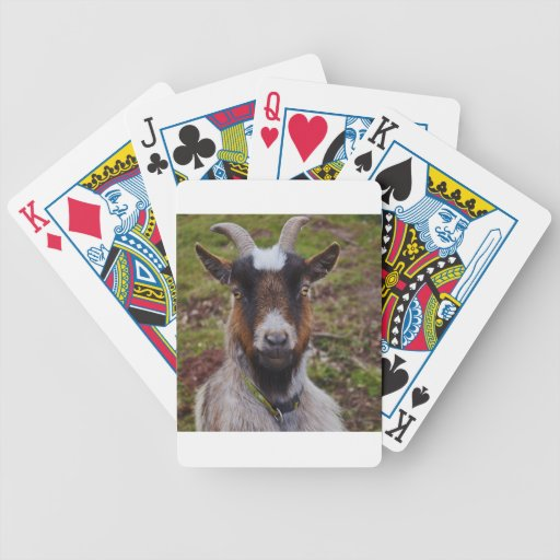 Goat close up. card deck
