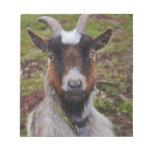 Goat close up. scratch pad