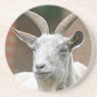 Goat Beverage Coaster