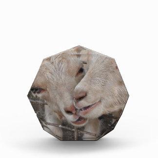 Goat Couple Acrylic Award