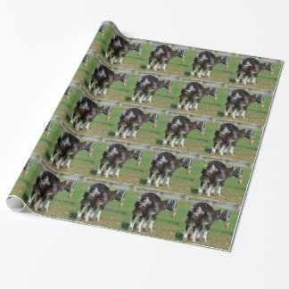 Goat eating carrot wrapping paper
