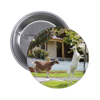Goat Eating From Tree Pinback Button