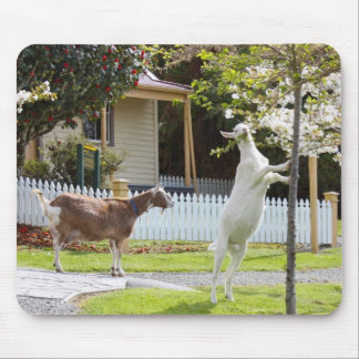 Goat Eating From Tree Mouse Pad