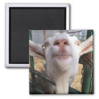 Goat Face Magnet