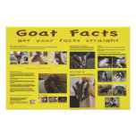 Goat Facts Poster 2