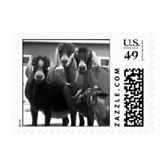 Goat Family Black and White Postage Stamps (SMALL)