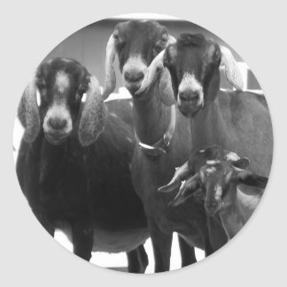 Goat Family Black and White Stickers